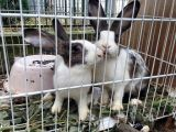 L'Enpa sequestra e libera due conigli da una ditta cinese
