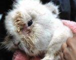 Non sono giocattoli: l'Enpa racconta il dramma del coniglio Ambrogio