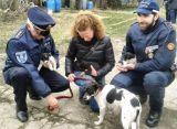 Cucciolo di venti giorni venduto illegalmente davanti a un supermercato