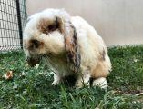 Si può ridurre un coniglietto così? Enpa denuncia tre casi